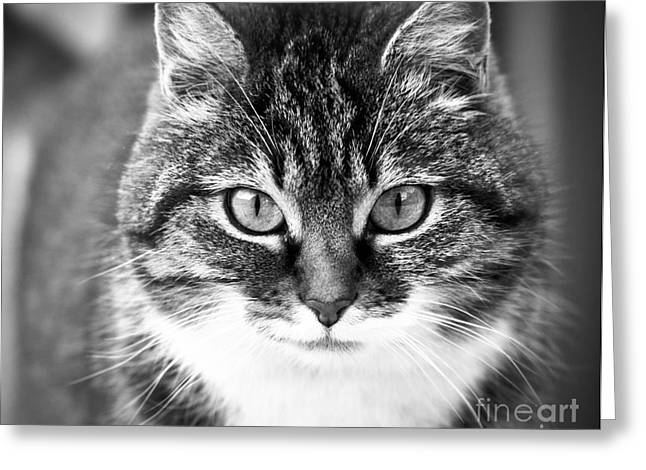 The Cat Stare Down Greeting Card