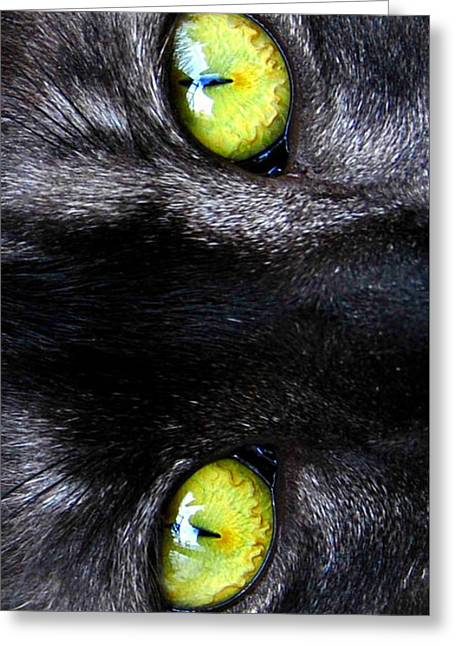 The Cat's Eyes Greeting Card by David Lee Thompson