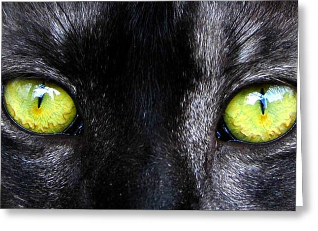 The Cat's Eyes Horizontal Greeting Card by David Lee Thompson