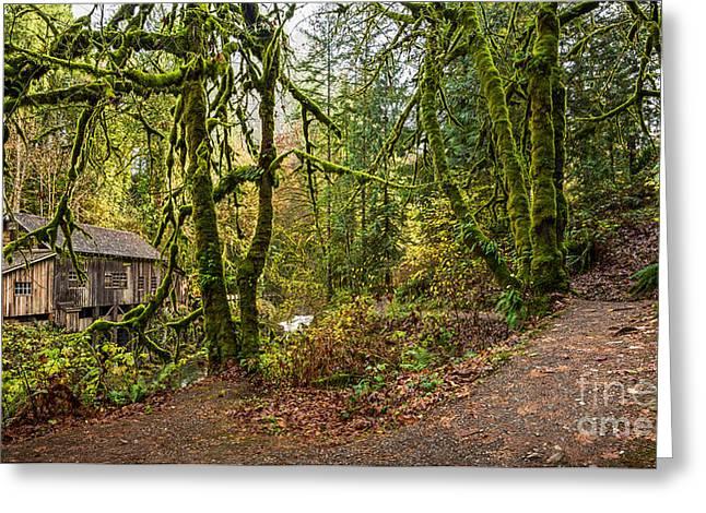 The Cedar Creek Grist Mill Trail Greeting Card by Jamie Pham