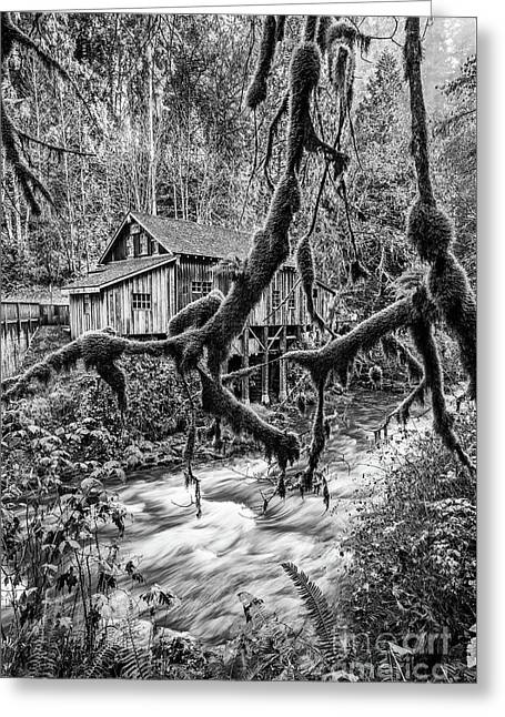The Cedar Mill And Moss Greeting Card by Jamie Pham