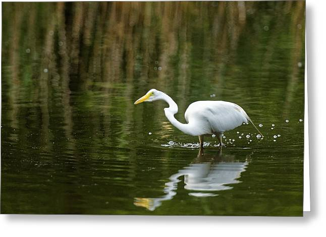 The Central Park Egret Greeting Card by M Nuri Shakoor