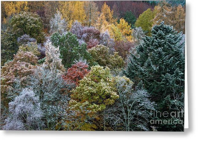 The Changing Season Greeting Card by Tim Gainey