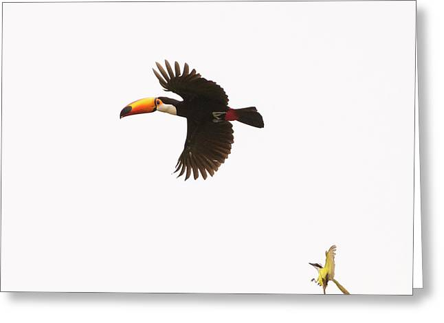Greeting Card featuring the photograph The Chase by Alex Lapidus