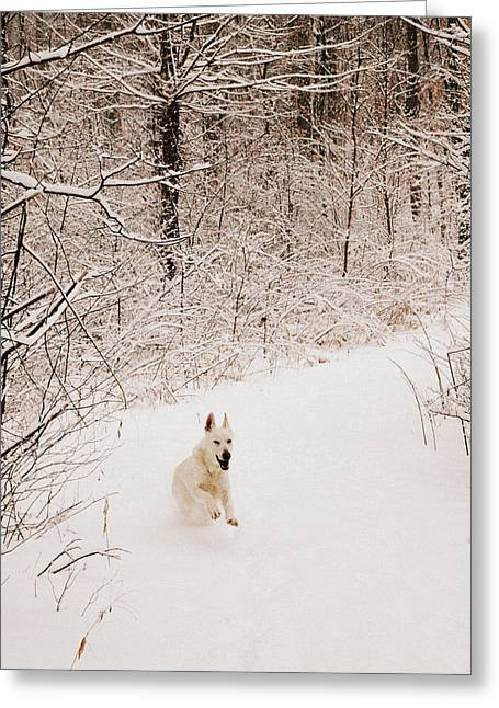 The Chase Greeting Card by Cheryl Helms