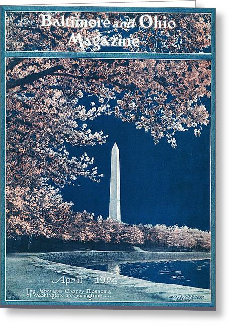 The Cherry Blossoms Greeting Card