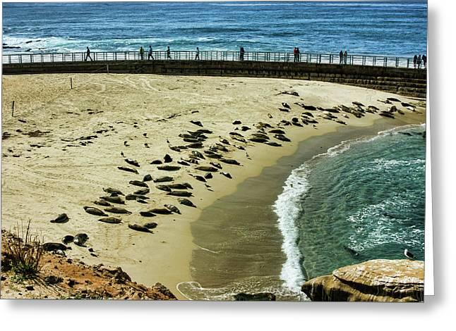 The Childrens Pool Beach Seals In La Jolla Cove California Greeting Card by Georgia Mizuleva