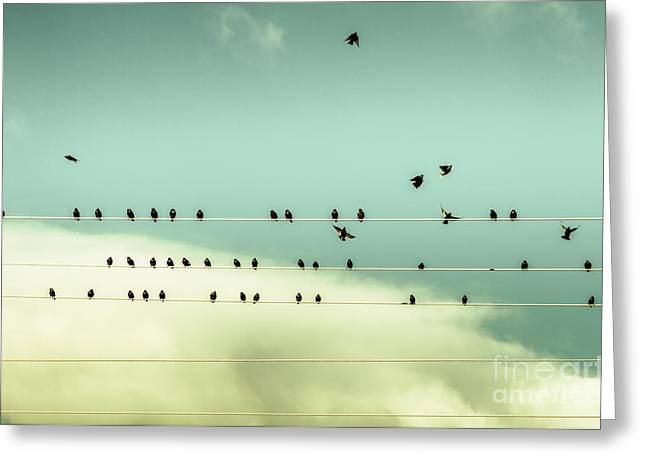 The Chorus Of Birds Greeting Card by Jorgo Photography - Wall Art Gallery