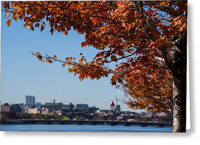 The Citgo Sign Through The Trees Boston Ma Charles River 2 Greeting Card by Toby McGuire