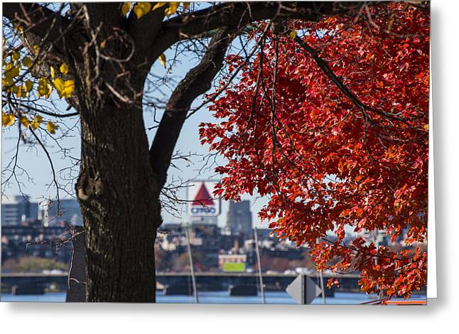 The Citgo Sign Through The Trees Boston Ma Charles River Greeting Card