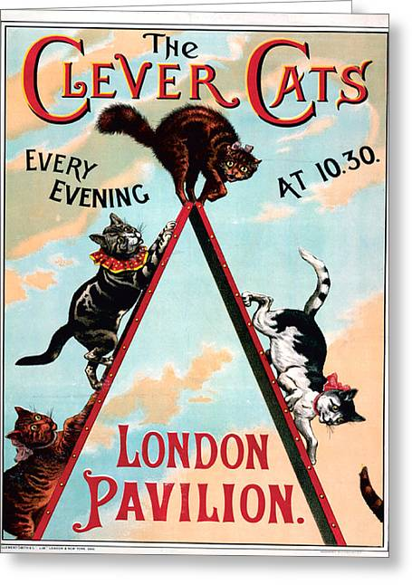 The Clever Cats Greeting Card by Lisa Schneider