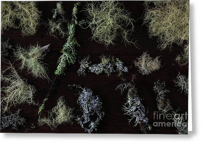 The Collection Of Lichens Greeting Card