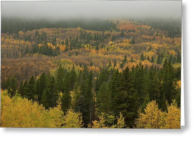The Color In Colorful Colorado Greeting Card