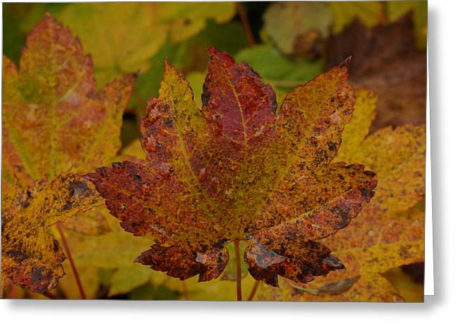The Color Of Autumn Greeting Card