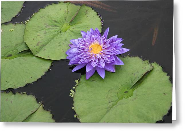 Greeting Card featuring the photograph The Color Of Splendor by David Dunham