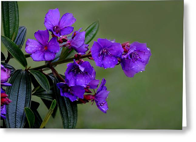 The Color Purple Greeting Card by Lyle  Huisken