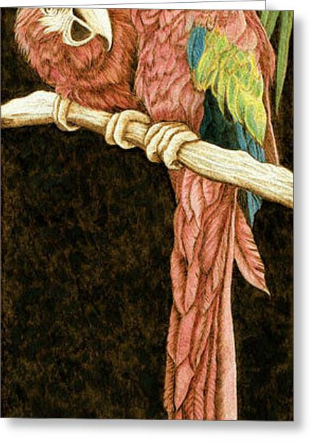 Parrot Pyrography Greeting Cards - The Colorful Macaws Greeting Card by Cate McCauley