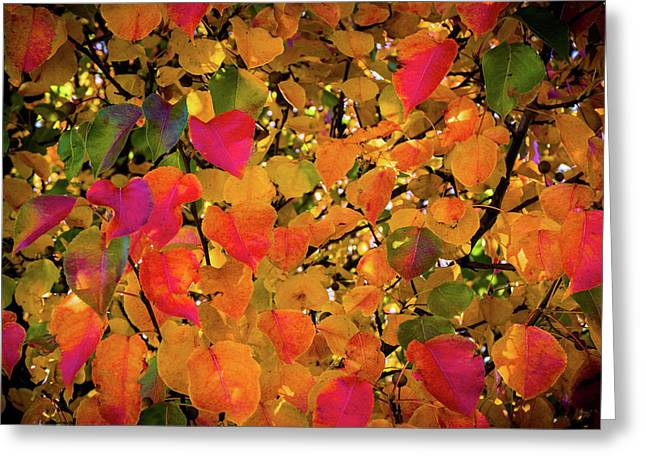 The Colors Of Autumn Number 2 Greeting Card by TL Mair