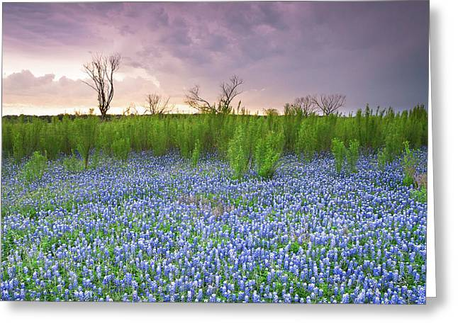 The Colors Of Bluebonnet Field On A Stormy Day - Texas Greeting Card