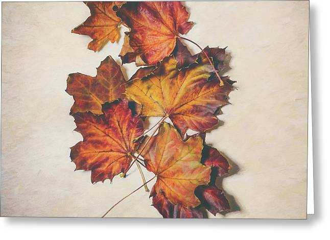The Colors Of Fall Greeting Card by Scott Norris