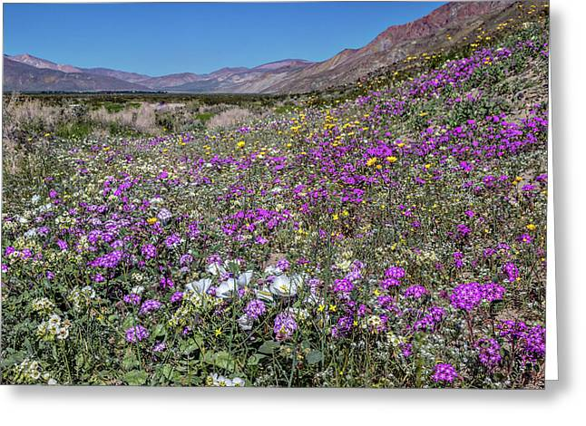 The Colors Of Spring Super Bloom 2017 Greeting Card by Peter Tellone