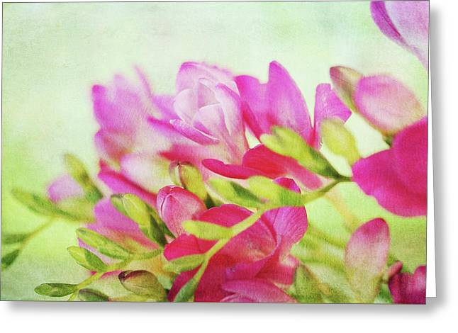 Greeting Card featuring the photograph Colour Full Freesia by Connie Handscomb