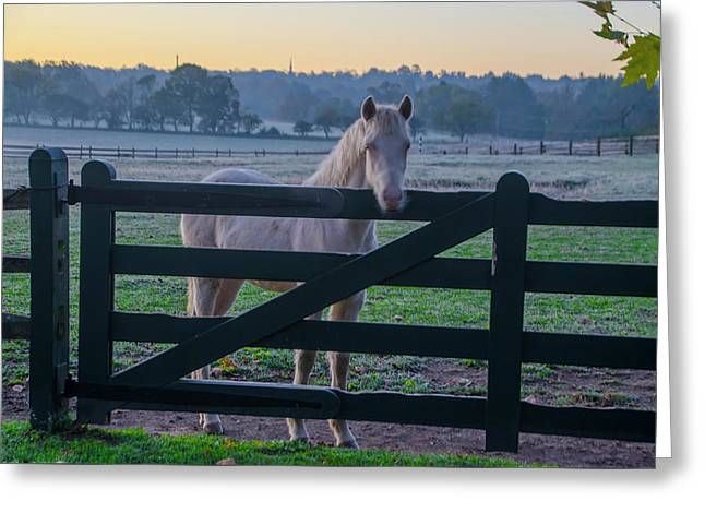 The Colt - Whitemarsh Pa Greeting Card by Bill Cannon