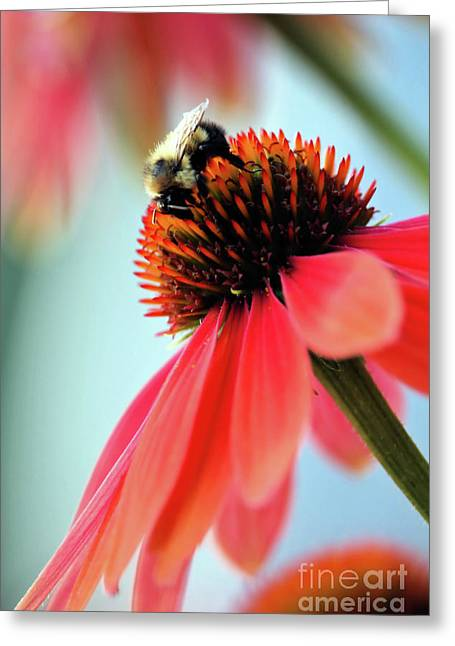 The Coneflower Collection 2 Greeting Card