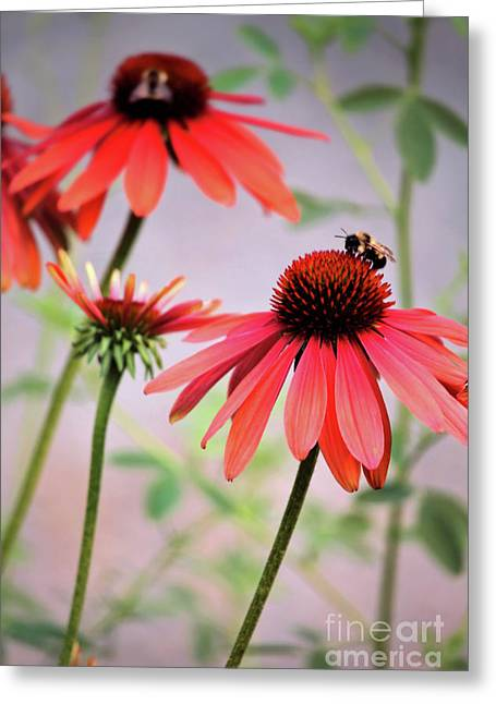 The Coneflower Collection Greeting Card