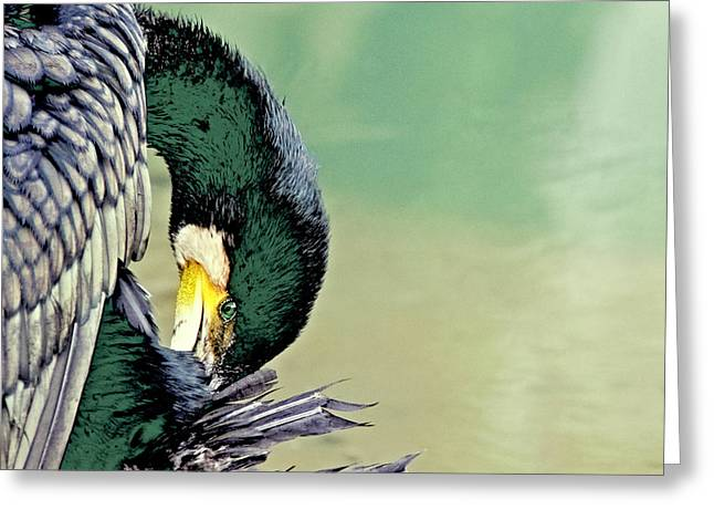 The Cormorant Greeting Card