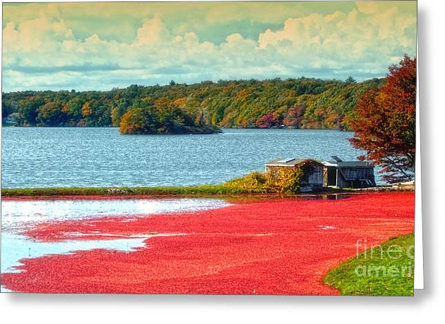 The Cranberry Farm On Cape Cod Greeting Card