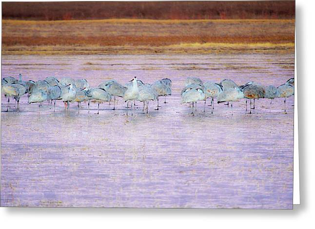 The Cranes Of Bosque Greeting Card