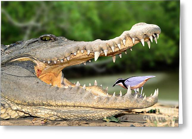 The Crocodile Bird Greeting Card