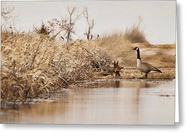 The Crossing Greeting Card by Patrick Ziegler