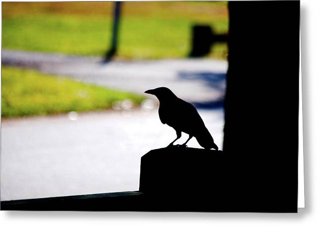 Greeting Card featuring the photograph The Crow Awaits by Karol Livote