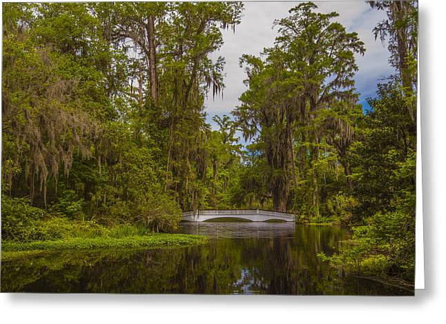Greeting Card featuring the photograph The Cypress Garden by Steven Ainsworth