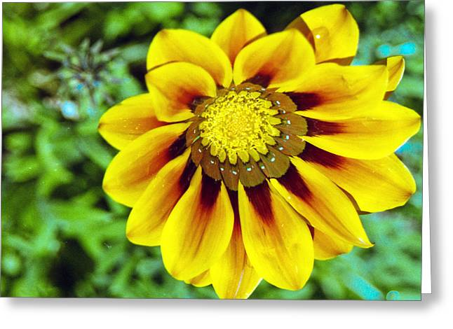 Greeting Card featuring the photograph The Daisy by Matthew Bamberg
