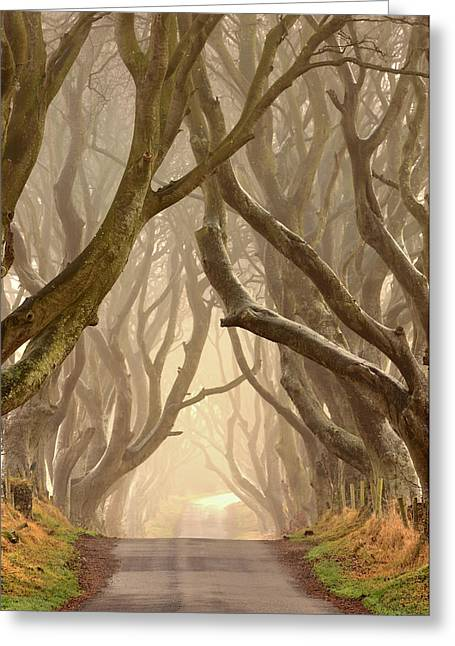 The Dark Hedges Greeting Cards - The Dark Hedges Greeting Card by Hubert Leszczynski