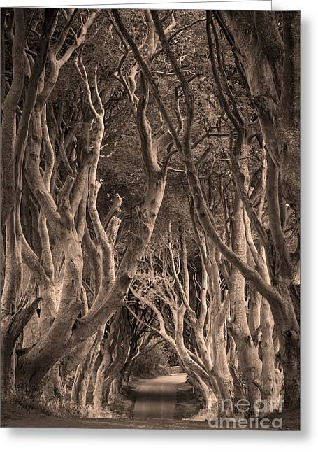 The Dark Hedges - Sepia Greeting Card by Brian Jannsen