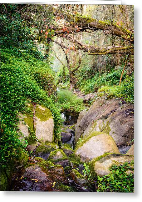 The Descent Down The Brook Greeting Card