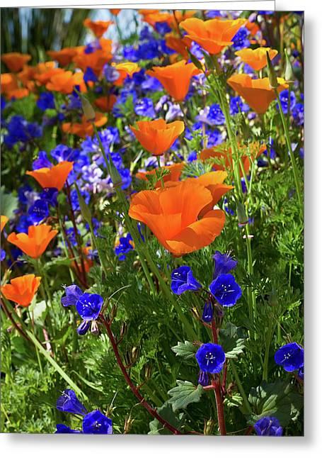 The Desert Blooms Greeting Card by Phyllis Denton