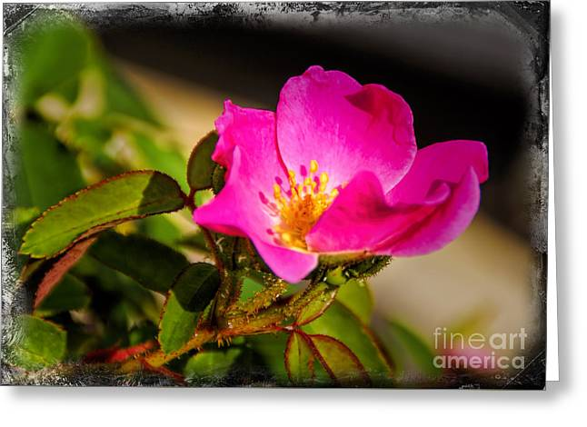 The Desert Rose Greeting Card by Janice Rae Pariza