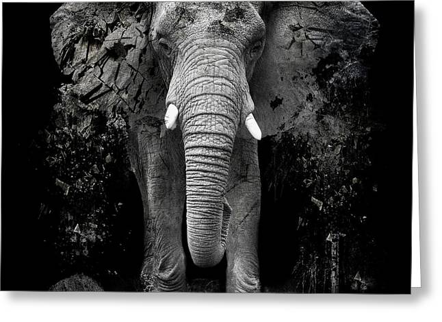 The Disappearance Of The Elephant Greeting Card