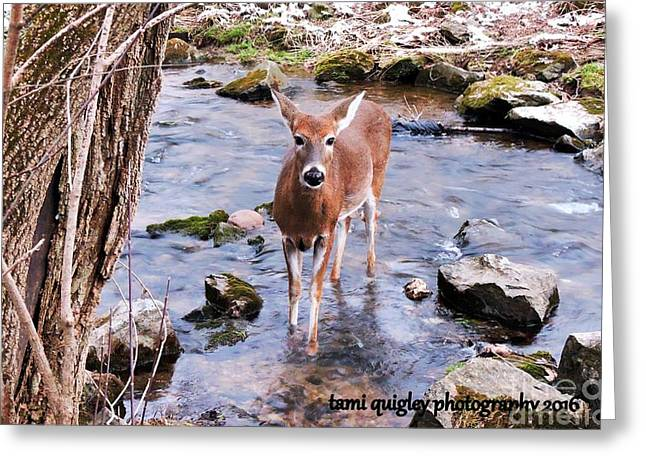 The Doe From Snowy Creek Greeting Card