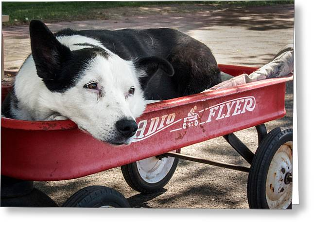 The Dog And The Radio Flyer Greeting Card by Mary Lee Dereske