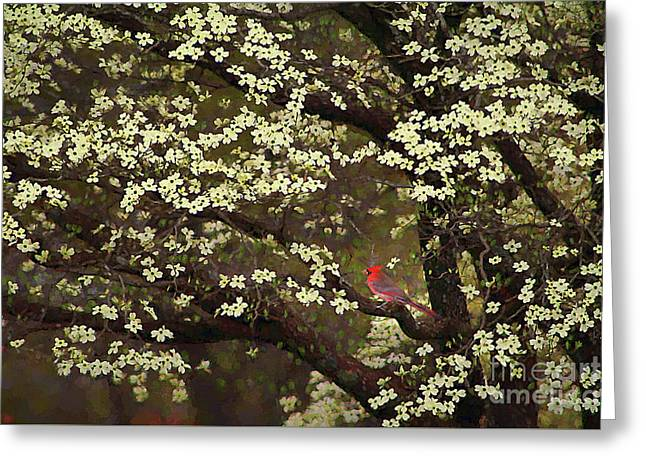 The Dogwoods And The Cardinal Greeting Card