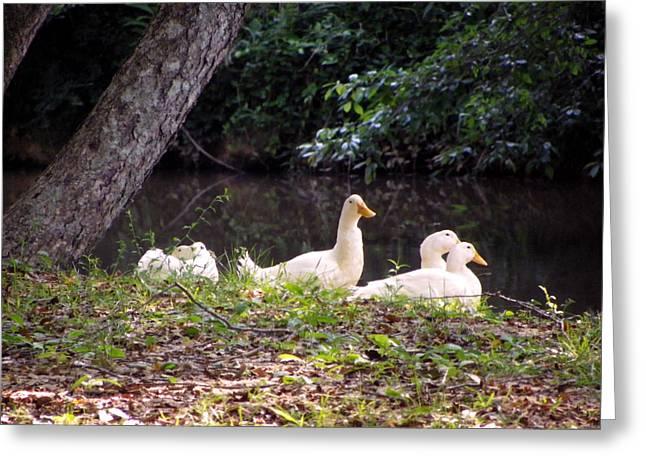 The Ducks Greeting Card by Eva Thomas