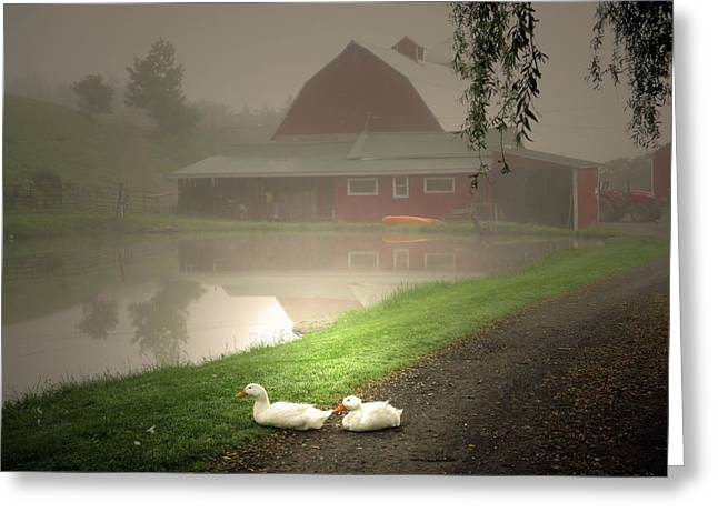 The Ducks In The Morning Fog At Maple Hill Farm Greeting Card by Patricia Keller