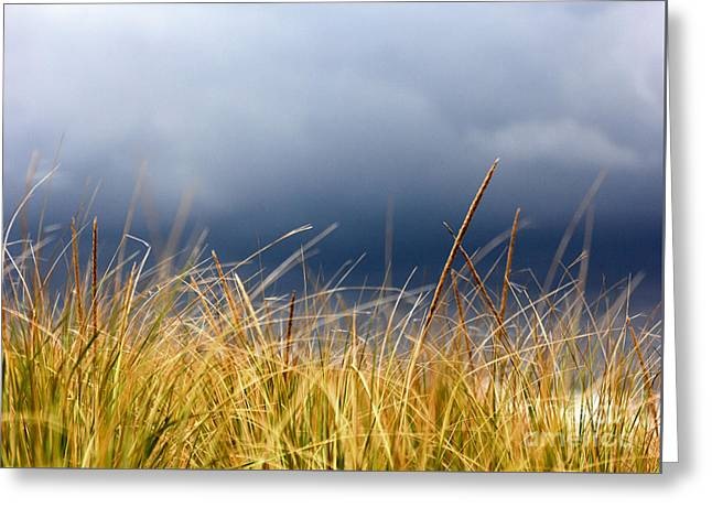 Greeting Card featuring the photograph The Tall Grass Waves In The Wind by Dana DiPasquale