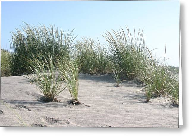 The Dunes Greeting Card by Dennis Curry